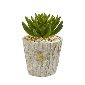 "11"" Succulent Artificial Plant In Weathered Oak Planter"