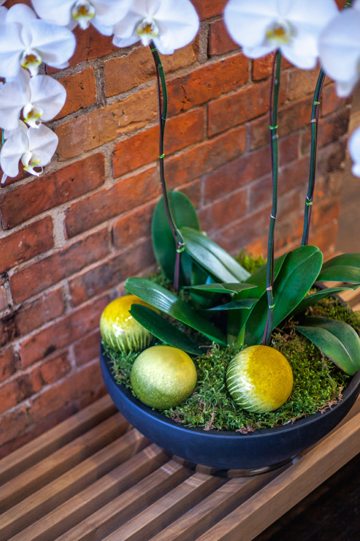 Bolla balls as decorative accents in plantings
