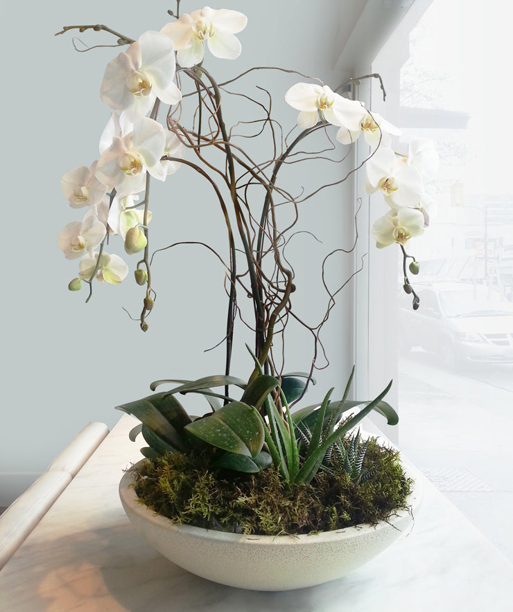 Dramatic orchids in Korros bowl