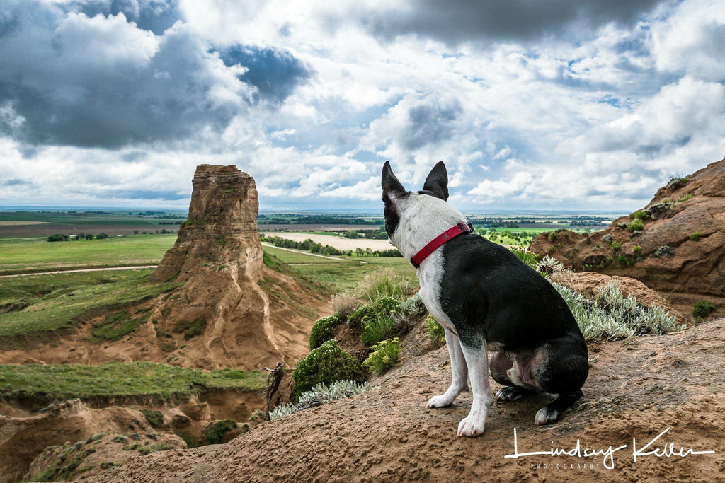 Dog sitting on mountain looking into the valley | Quiet Time Photo Challenge
