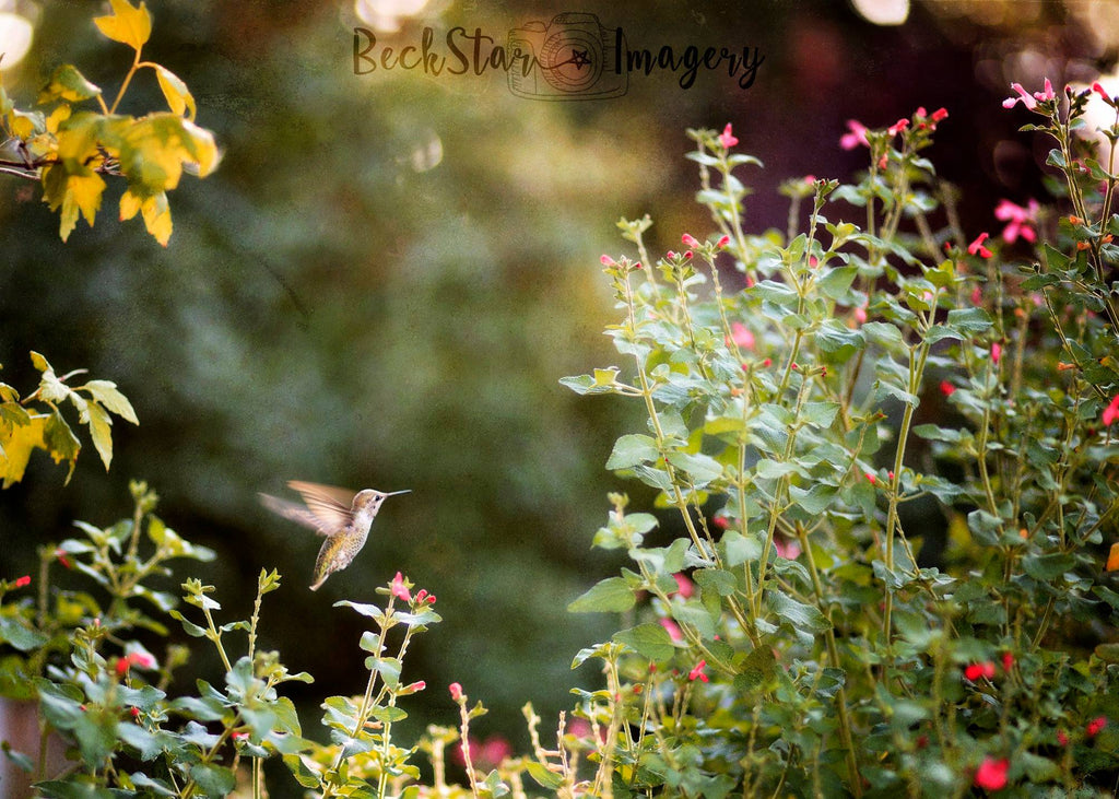 Hummingbird among flowers with a bokeh background