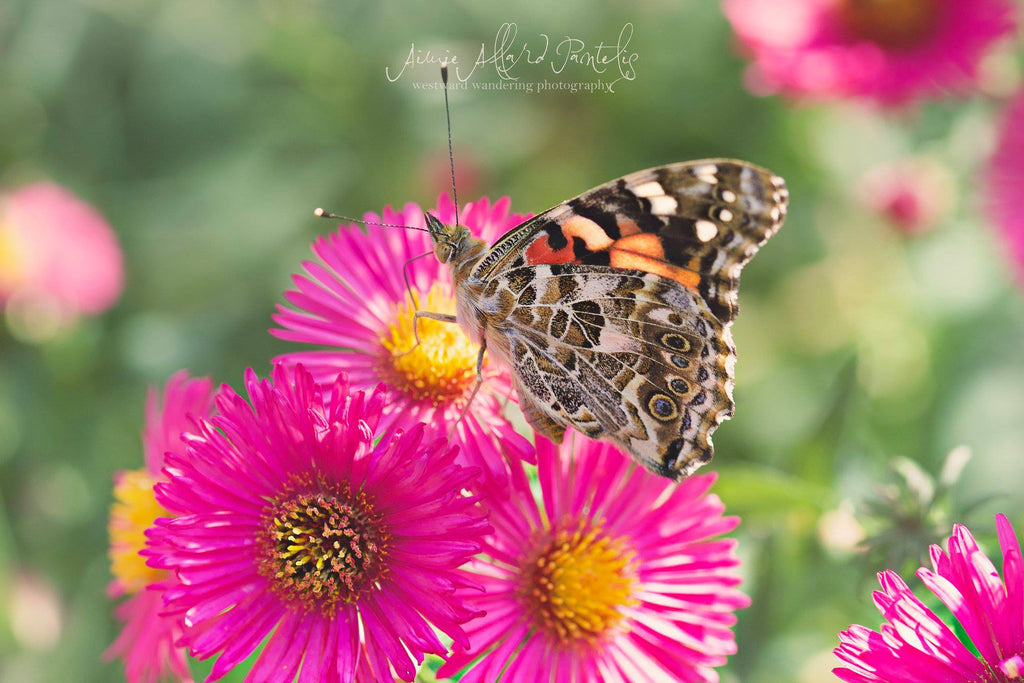 Beautiful pink flower with an orange butterfly landing on it and a bokeh background