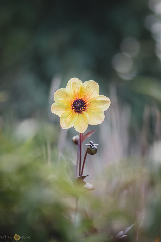 Pretty yellow flower with bokeh background