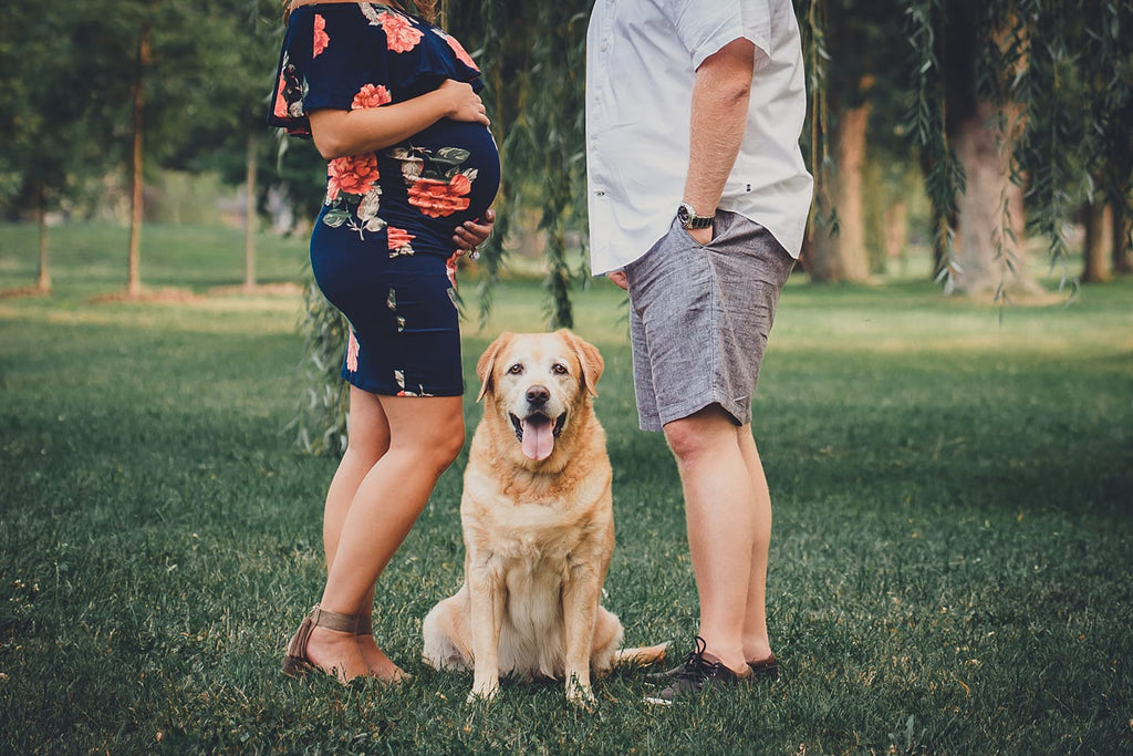 Photo of dog sitting between owners during maternity photography session