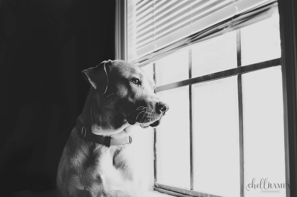 Black and white photo of Dog looking out window
