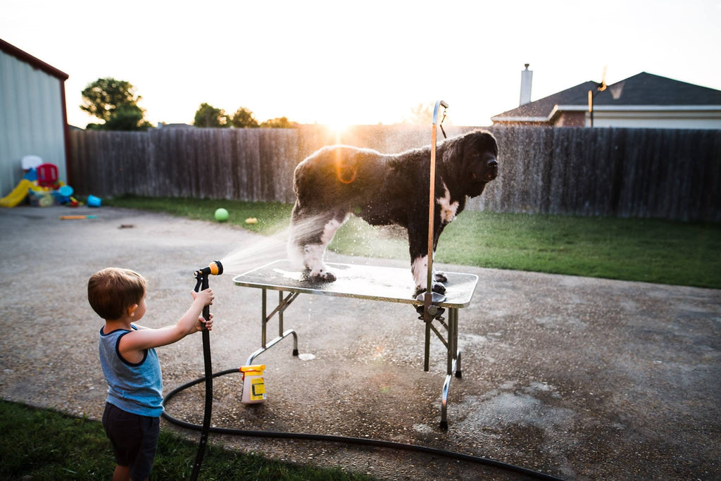 Photo of boy washing dog on a table outside