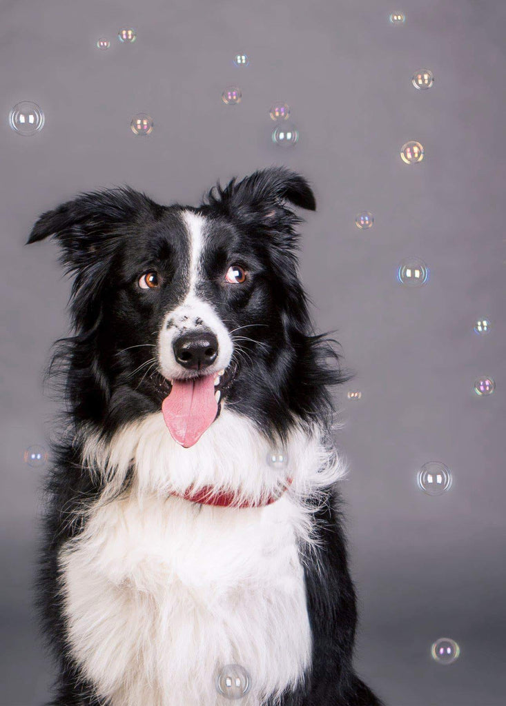 Dog and bubbles photo