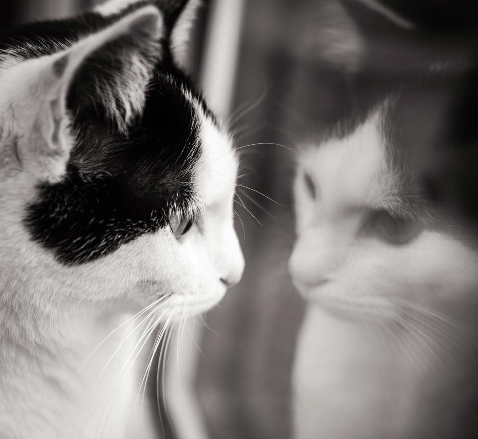 Cat looking into window at reflection