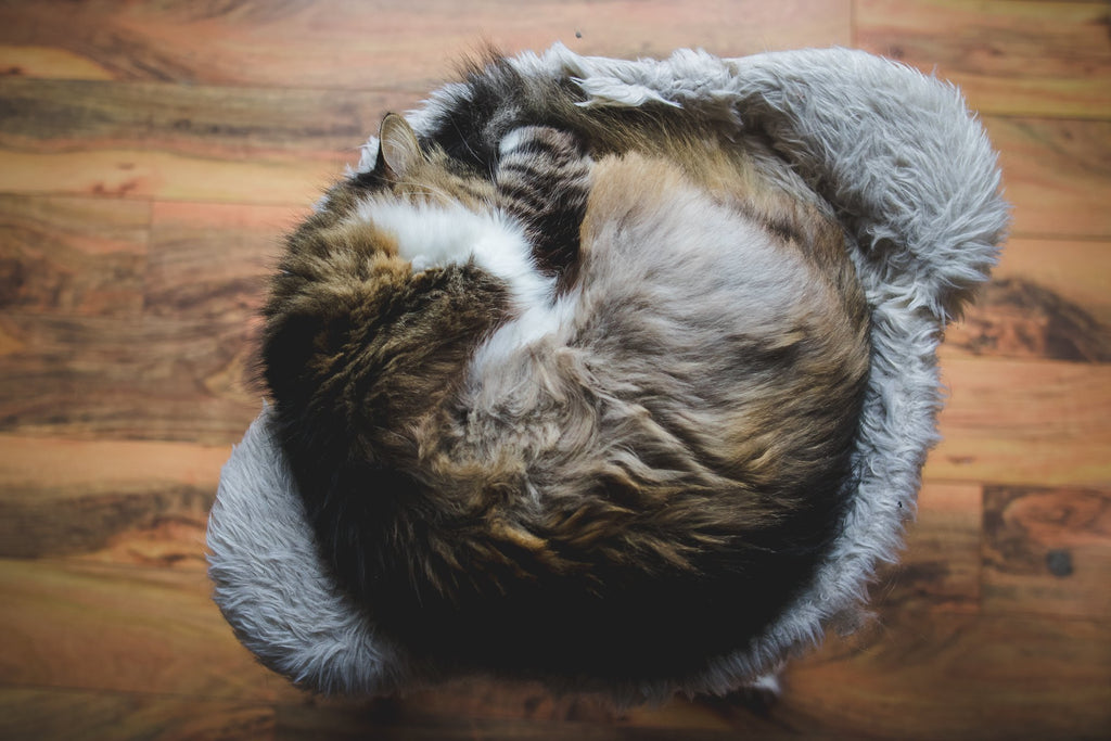 Cat curled up in a ball sleeping