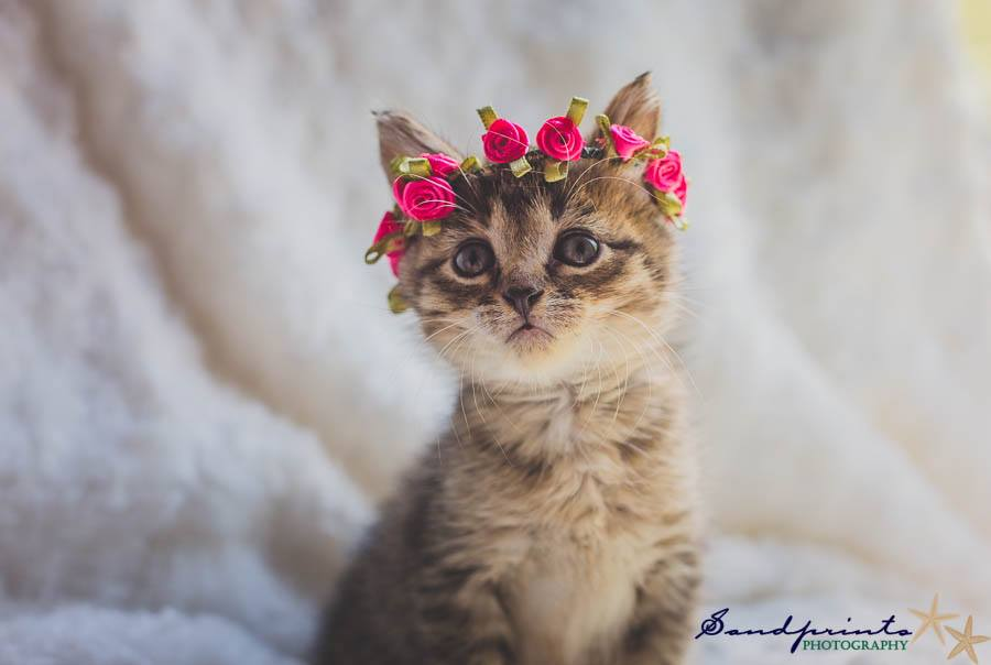 Kitten with pink floral piece on head
