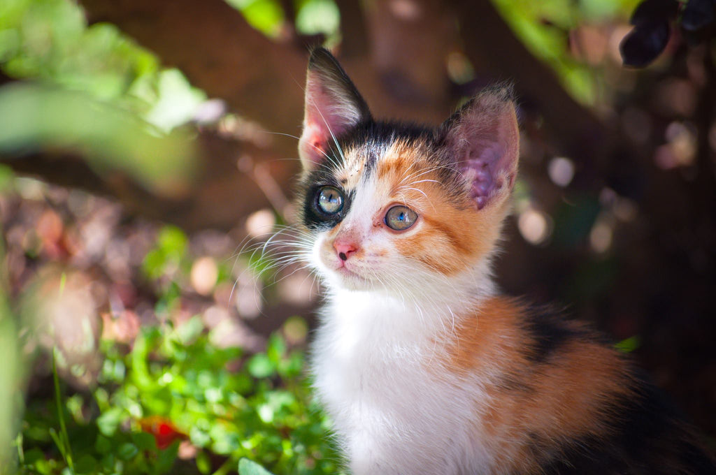 Kitten out in the yard