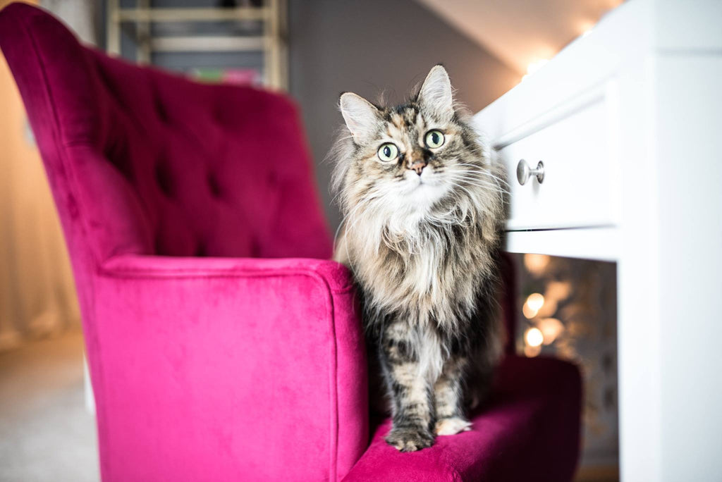 Cat sitting on a pink chair