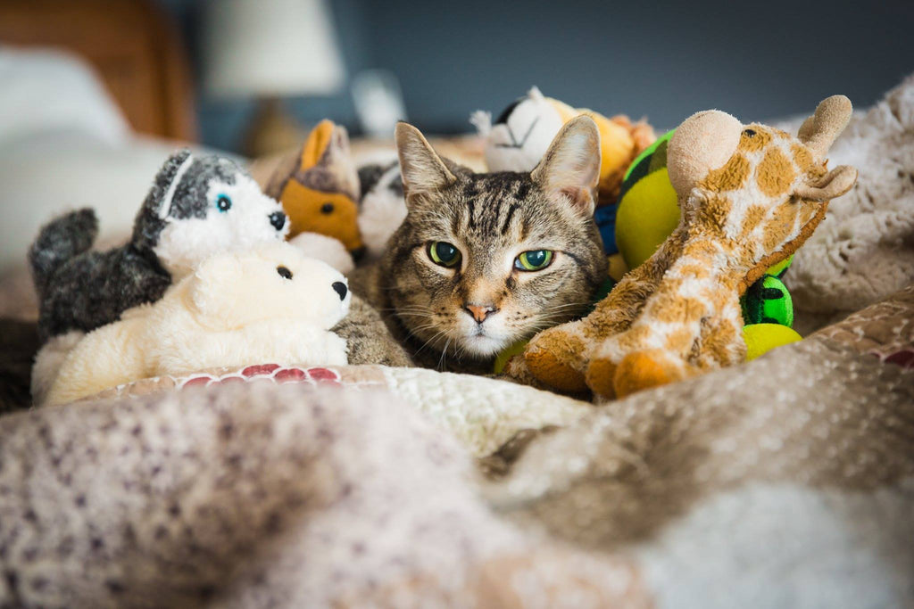 Cat sleeping with stuffed animals