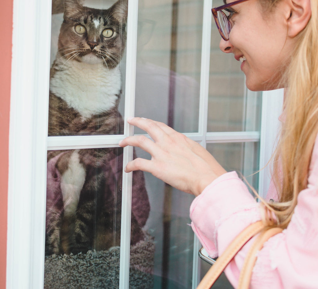 Woman tapping on window next to cat