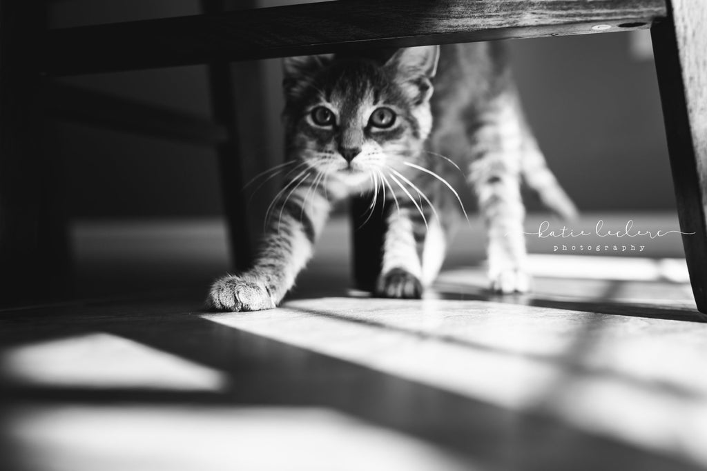 Cat stretching under table