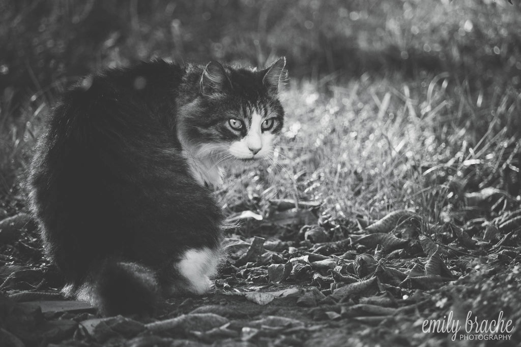 Black and white photo of cat in the field