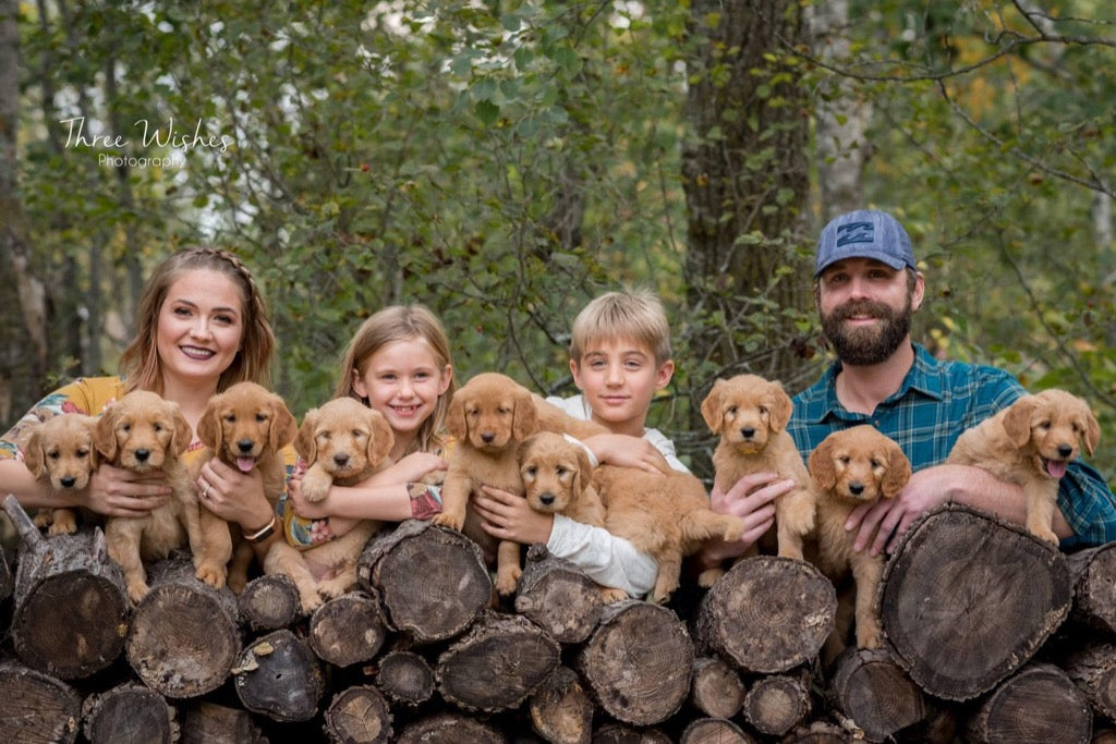 Puppies and their family