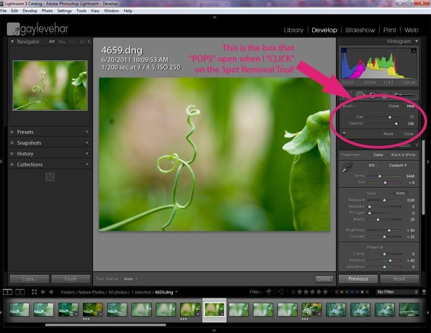 How to Remove Dust Spots in Lightroom
