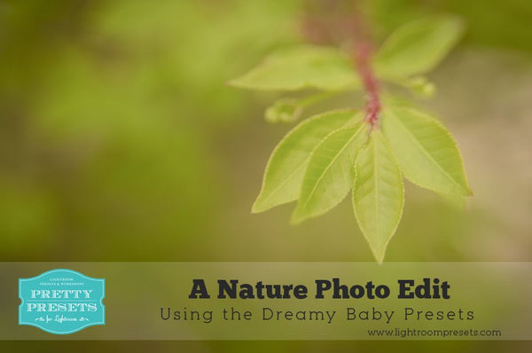 Nature Photo Edit Using Pretty Presets for Lightroom | Pretty Presets Lightroom Tutorial