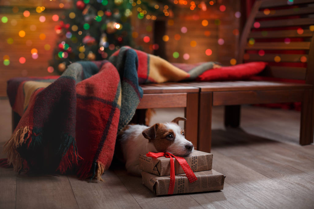Bokeh Lightroom Presets Added to Photo of Dog Under Christmas Tree