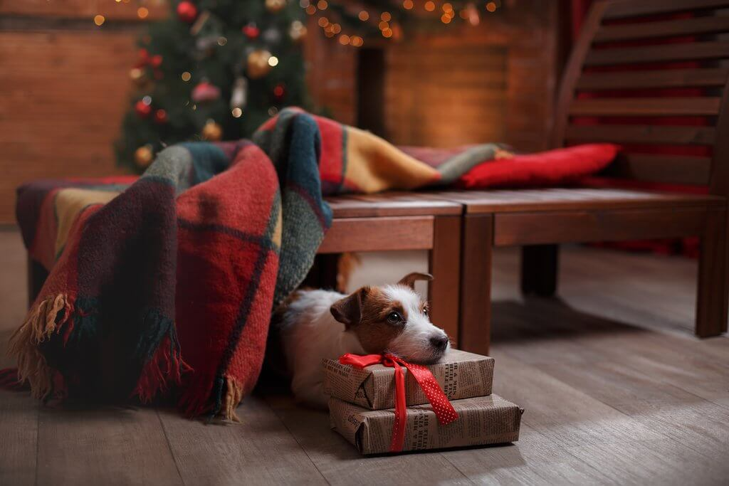 dog under christmas tree with presents