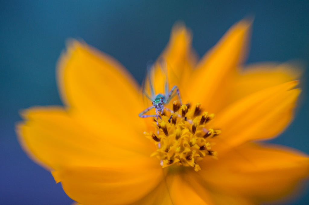 Freelensing Macro Photo of a Yellow Flower