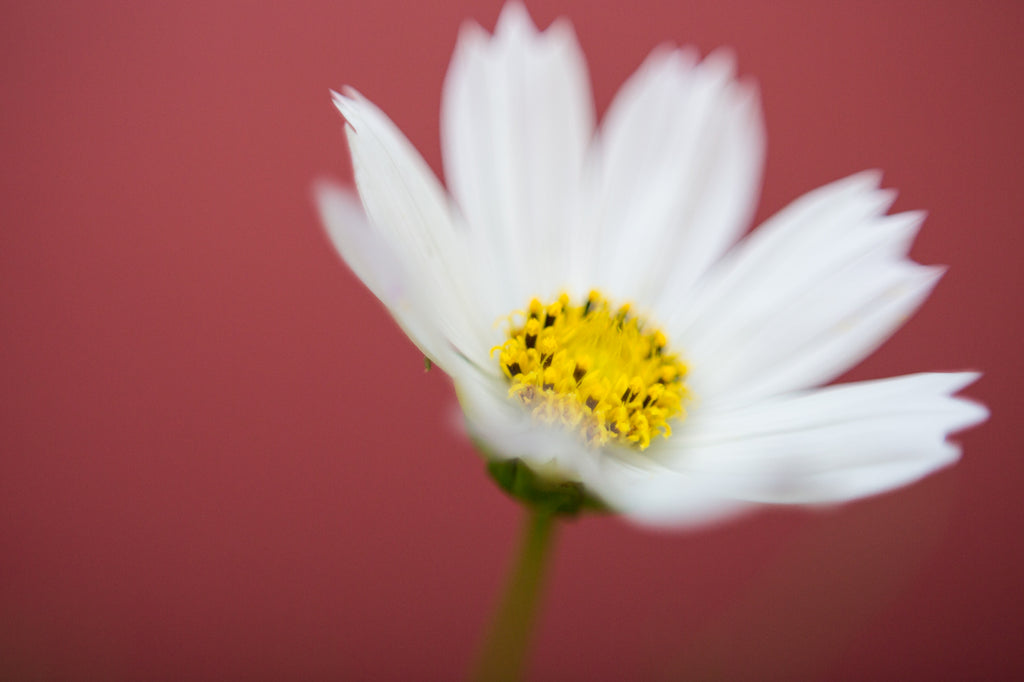 Freelensing Macro Photo of White Flower