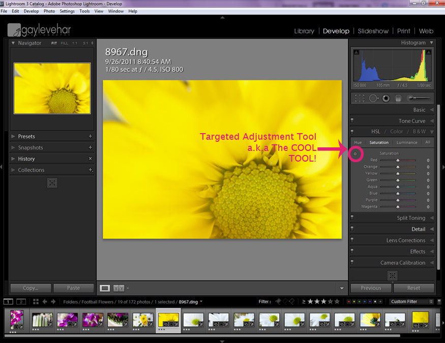 How to Use Targeted Adjustment Brush