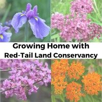Growing Home with Red-Tail Land Conservancy