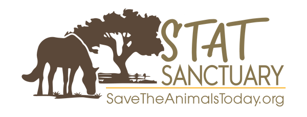 stat-sanctuary-horse-rescue