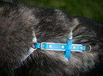Top view of a y front dog harness, made from biothane in Australia. Hardware is brass and harness is blue and white.