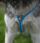 Front view of Custom Made Y Front dog harness with brass hardware. Made in Australia.