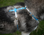 Side View of Blue and White harness on a dog. Brass buckles at the shoulder and quick release buckles on the girth. Extra D Rings.