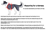 Chart describing how to measure for a dog harness