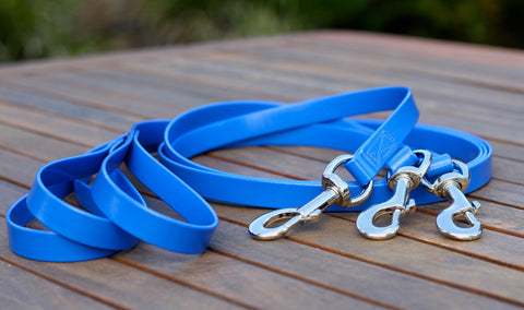 Cyan Blue Dog Lead
