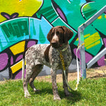 Puppy wearing australian made biothane utility multi leash tied to a post in front of a graffiti wall.
