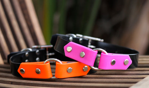 Boithane two toned dog collar