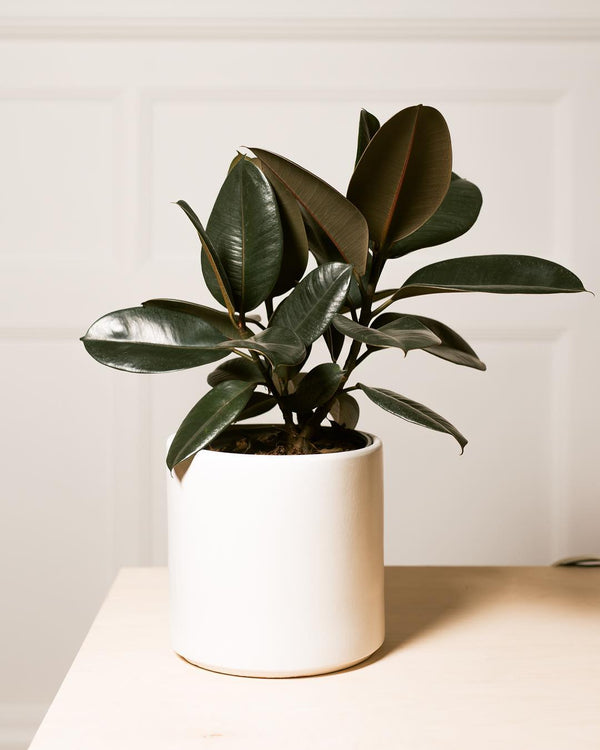 Large Matte White Cylinder Pot