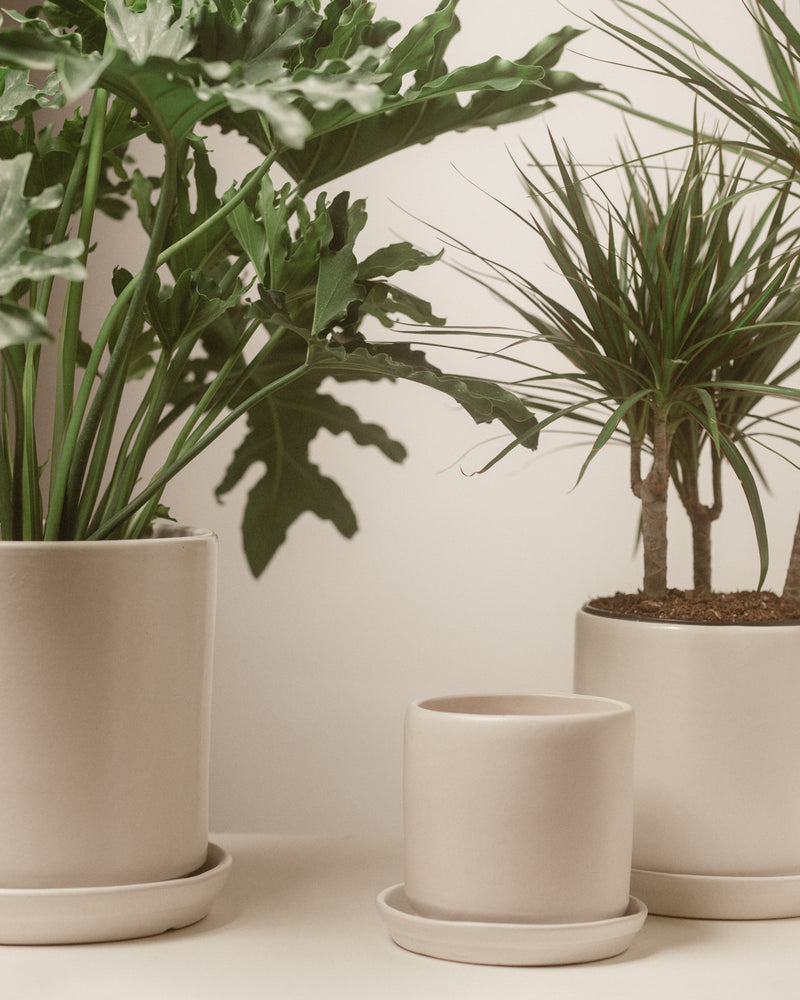 Medium Matte White Cylinder Pot