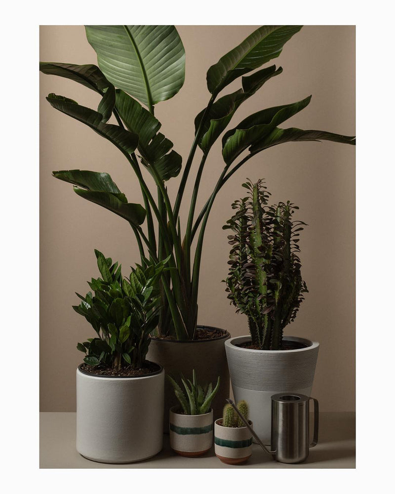 Lifestyle Planter Medium