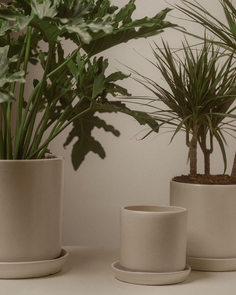 XX-Large Matte White Cylinder Pot