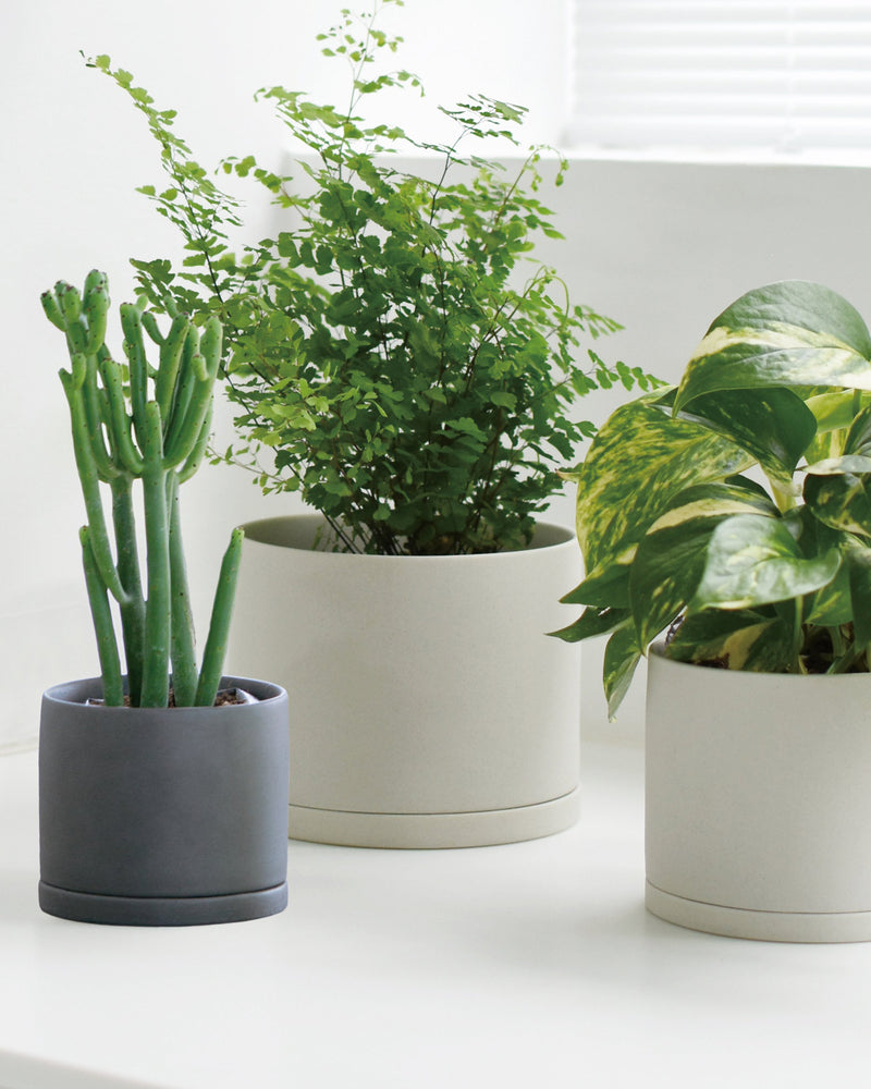 Plant Pot 191 Large - Earth Gray