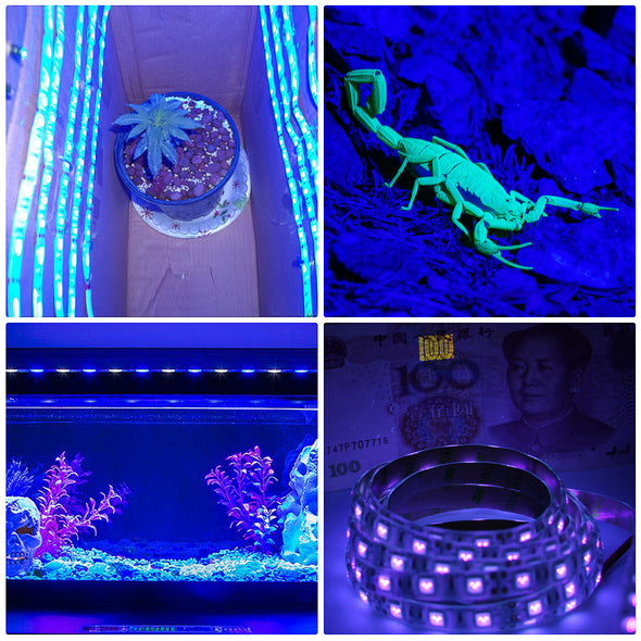UV LED Strip Lights - 2 Pack Battery Operated LED Black Light Strip Kit with 6.6FT Ultraviolet IP65 Waterproof Super Bright LED Strip Lights, Battery Case by iCreating 2020 New Design