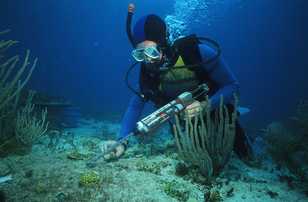 Scientist under the sea (not in Oxford)