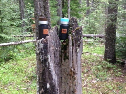 nature's cup holders in Glacier National Park