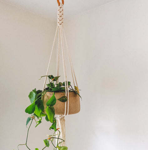 Hand-built Planters and Plant Hangers Virtual Workshop with Sarah Steininger Leroux and Ashley Campbell: May 8th, 1pm - 5pm