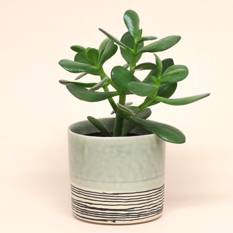 Striped Round Planter by Elizabeth Benotti