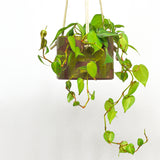 Shapes Hanging Planter