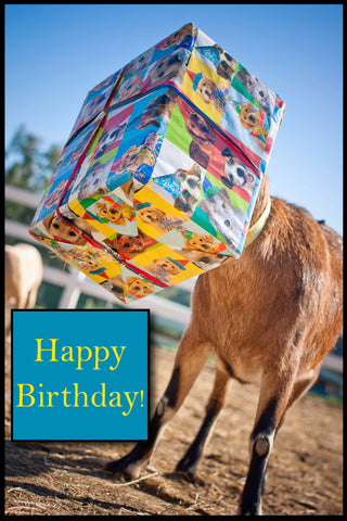 Goat in Box Birthday Card
