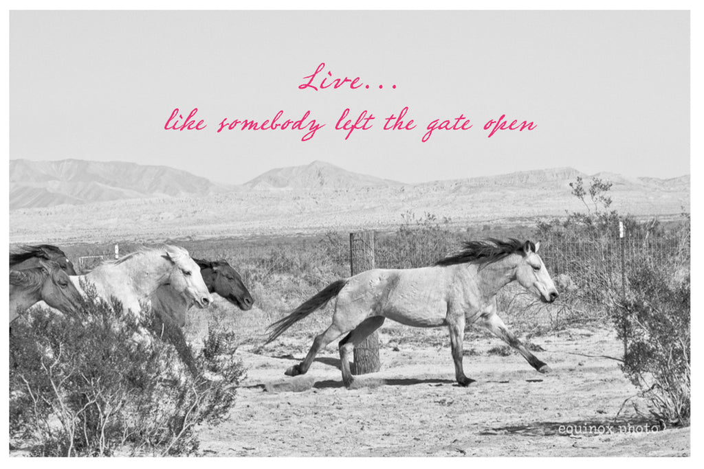 live like someone left the gate open card by cowgirls for a